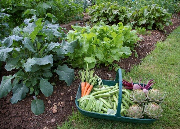 मध्य प्रदेश में धान के साथ उगा रहे मौसमी सब्जियां, कमा रहे लाखों