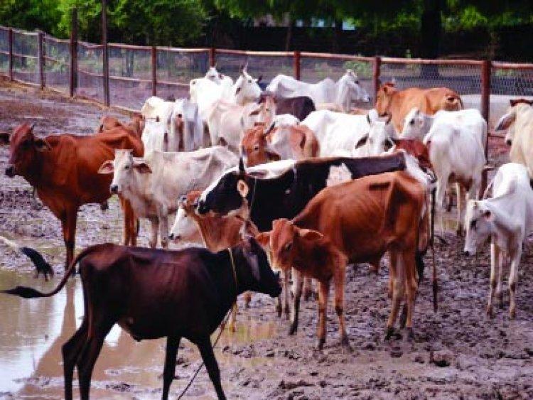 रानीघाटी में दो तालाब बनाने से 2000 गायों को मिला पानी