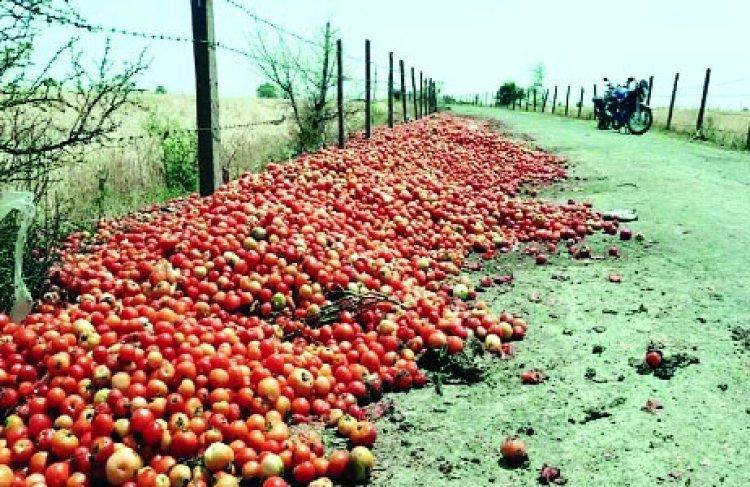 टमाटर के भाव ने किसानों के निकाले आंसू