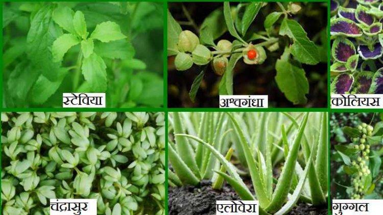 औषधीय पौधों की खेती और उत्पादन को बढ़ावा देने के लिए समझौता
