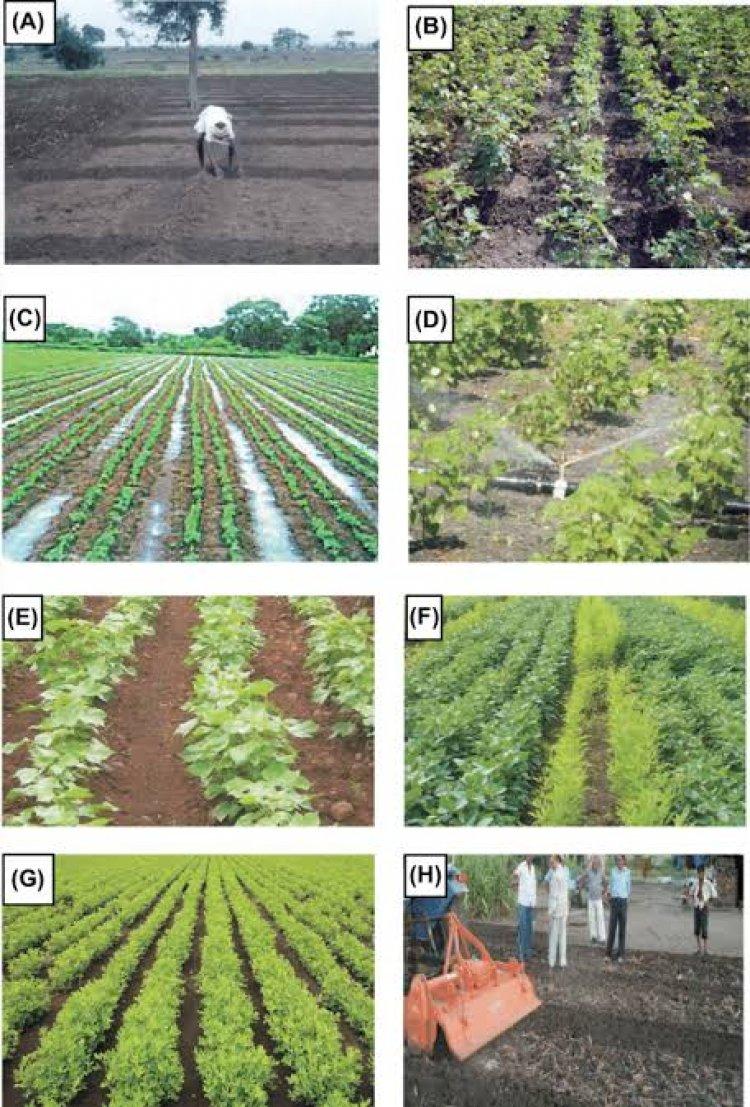 कैसे बढ़ाएं खरीफ की फसलों में उत्पादकता बढ़ाने, जानिए वैज्ञानिकों के सुझाव