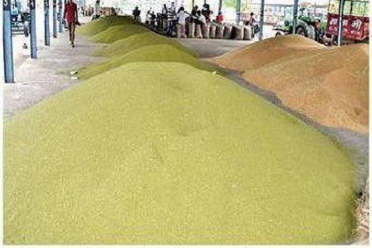 पहली बार 6 लाख 56 हज़ार मिट्रिक टन मूंग खरीदेगी मप्र सरकार, 15 जून से 25 जिलों में शुरू होगी खरीद