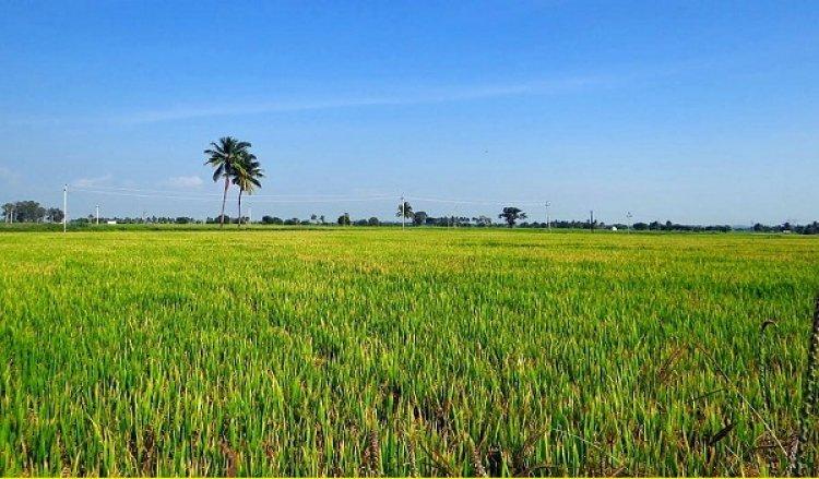 बेवीनारमें कृषि वैज्ञानिकों ने बताया कैसे करें धान की सीधी बुआई