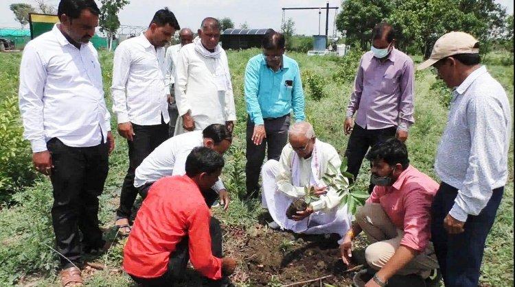 कृषि विज्ञान केन्द्र, टीकमगढ़ में जिला पंचायत अध्यक्ष ने किया वृक्षारोपण