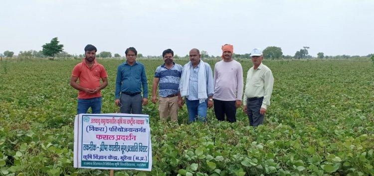 गर्मी में मूंग की खेती किसानों के लिए वरदान