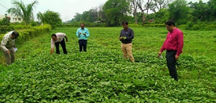 कृषि विज्ञान केन्द्र टीकमगढ के वैज्ञानिकों ने देखी उडद की फसल, किसानों को दी सलाह